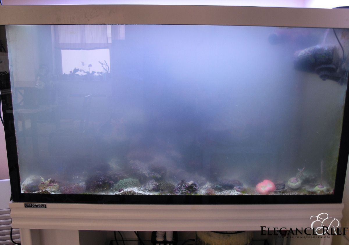 Help cold water smelly tank 97999 for Why is my fish tank water cloudy